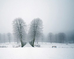 http://darprirody.ru/pict/sezonnye-raboty-yanvar1.jpg